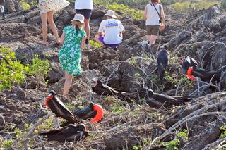 Navighating the rocks and Frigate  Birds.jpeg
