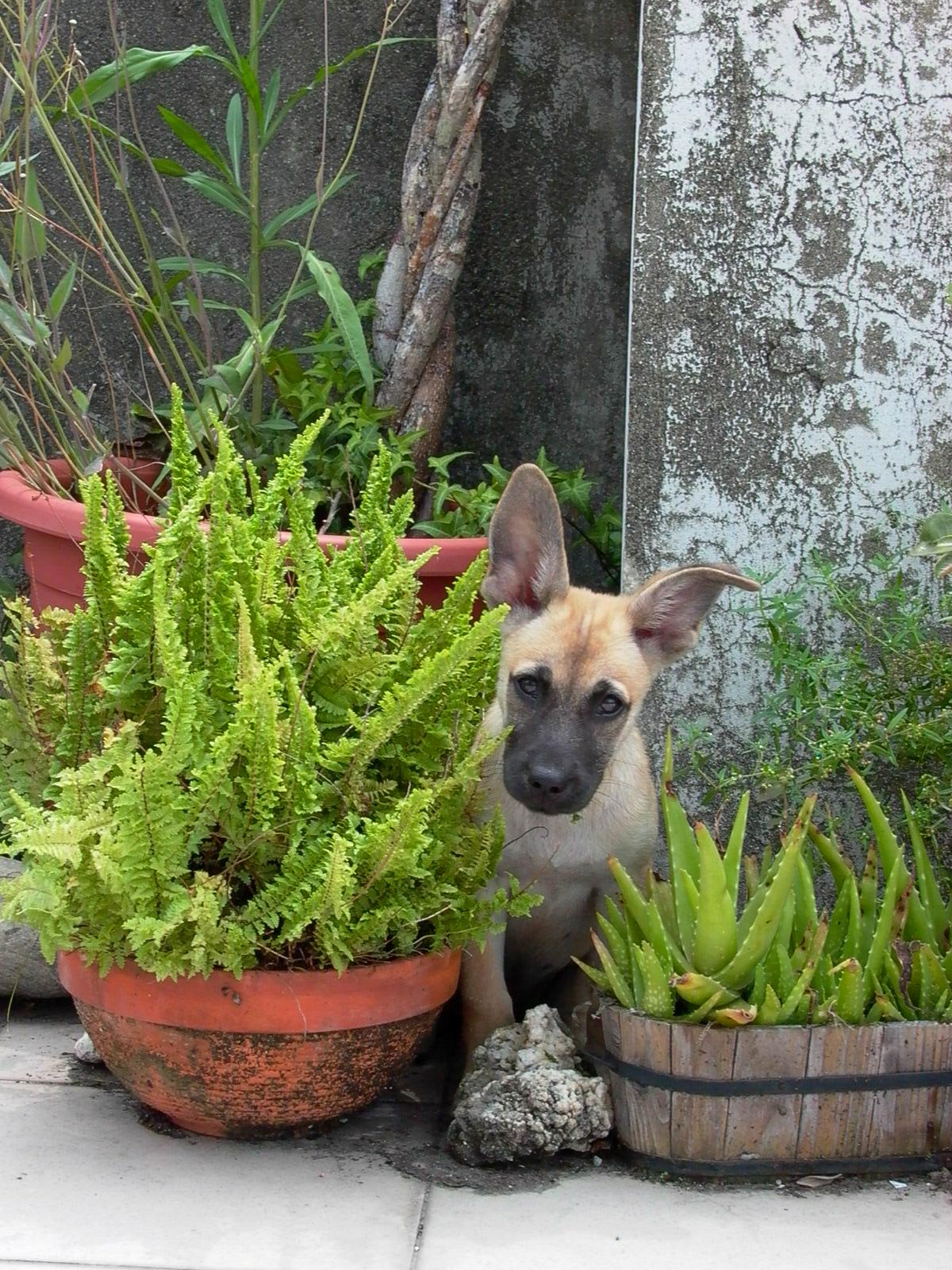 YLIAT Flea puppy plants.jpg