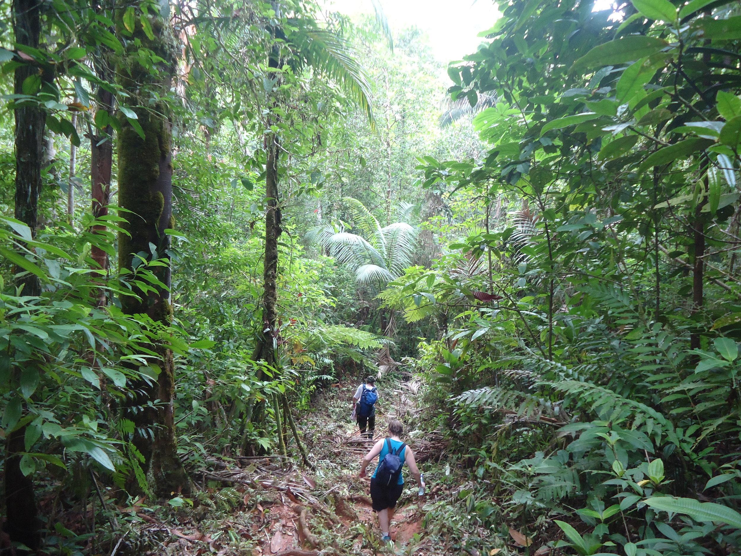 hike through jungle.JPG