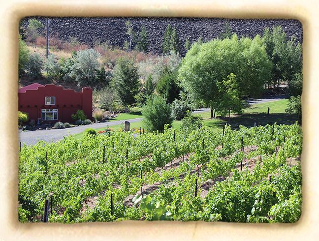 Vineyard-slide5.jpg