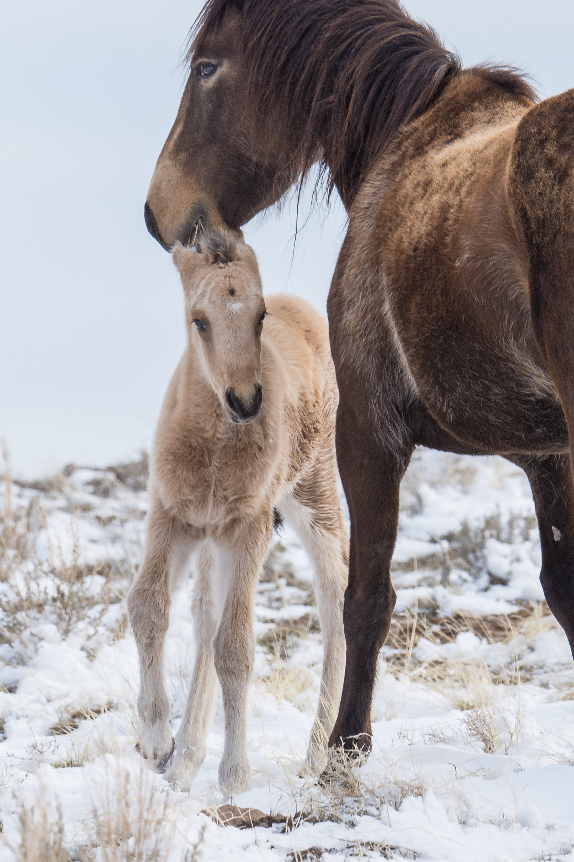 Mustang Colt with Mom