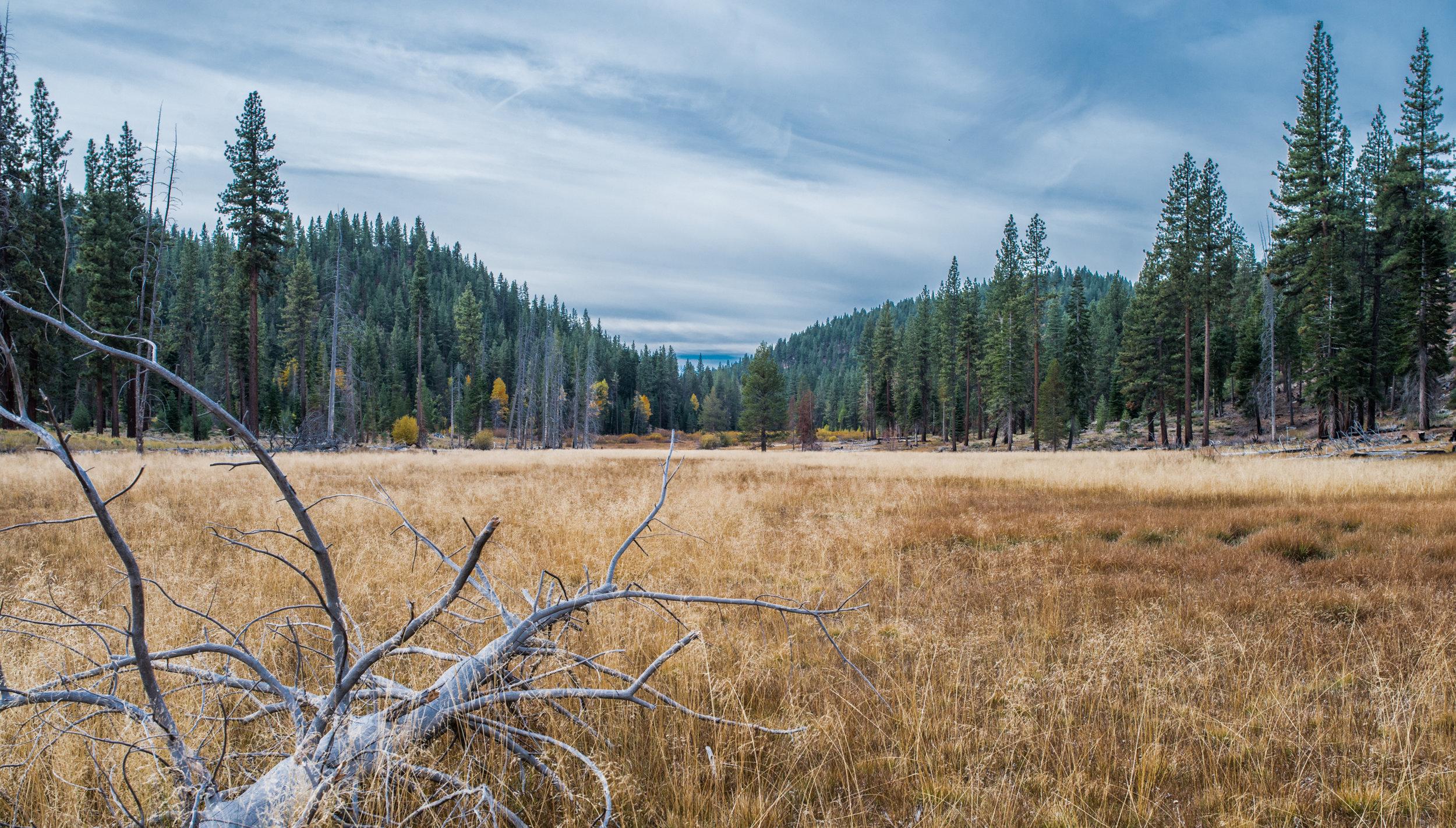 Skunk Harbor Fall Meadow, Washoe Co. NV (Oct 16, 2014)