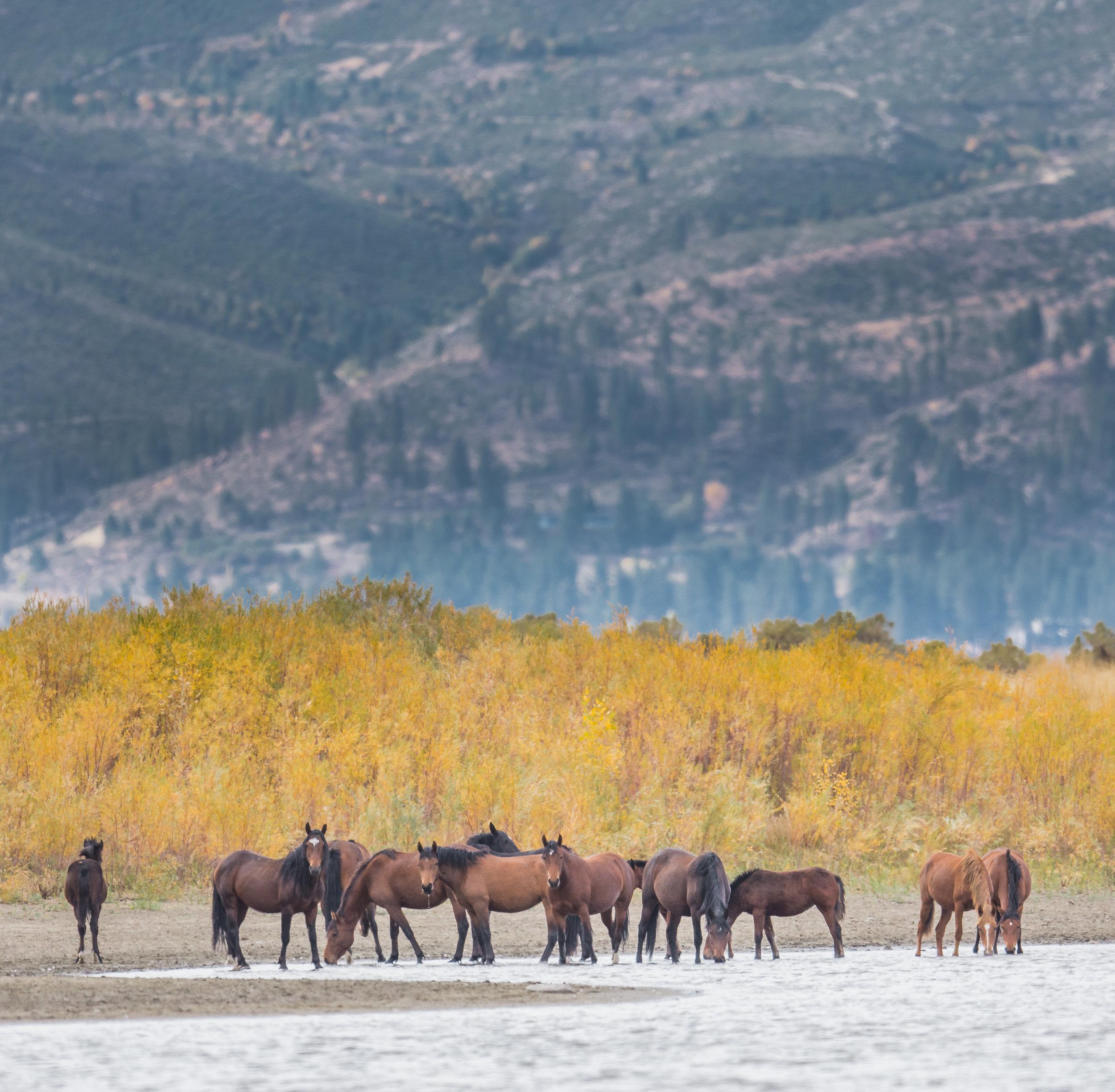 Little Washoe Lake Mustangs, WAS (NV)