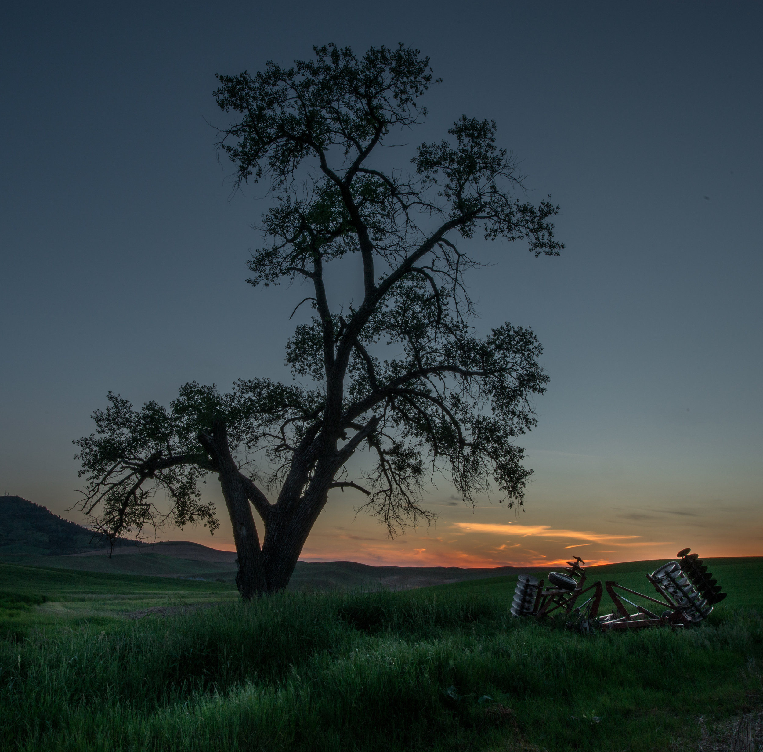 Featured Photo 52: Lone Oak and Tiller at Sunset: Steptoe, WHI (WA)  EQ: D800, 14-24mm f/2/8, Tripod  Taken: 6-6-2017 at 19:50   Settings: 22mm, 1/10s, f/20.0, ISO400, -1EV  Conditions: clear
