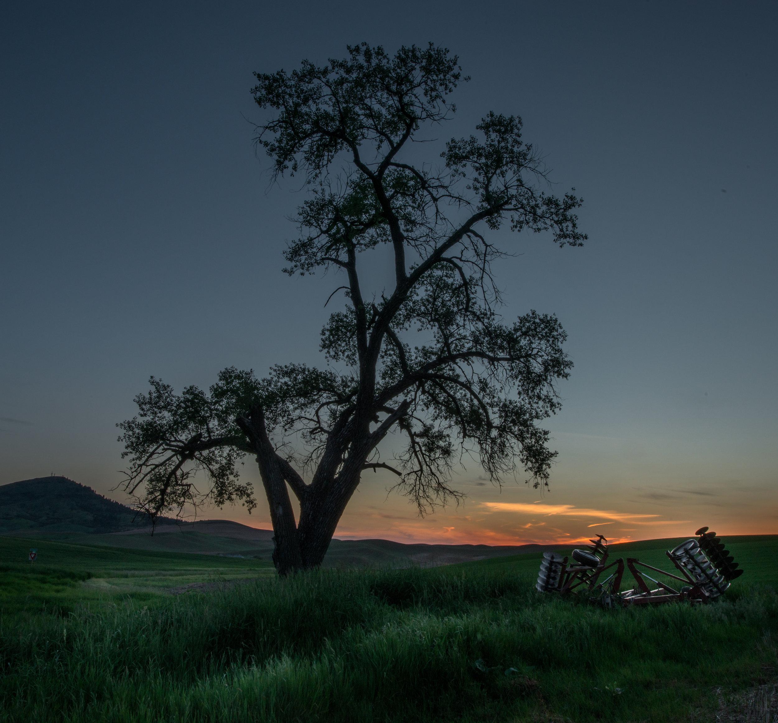 Lone Tree at Sunset, Palouse (WA)