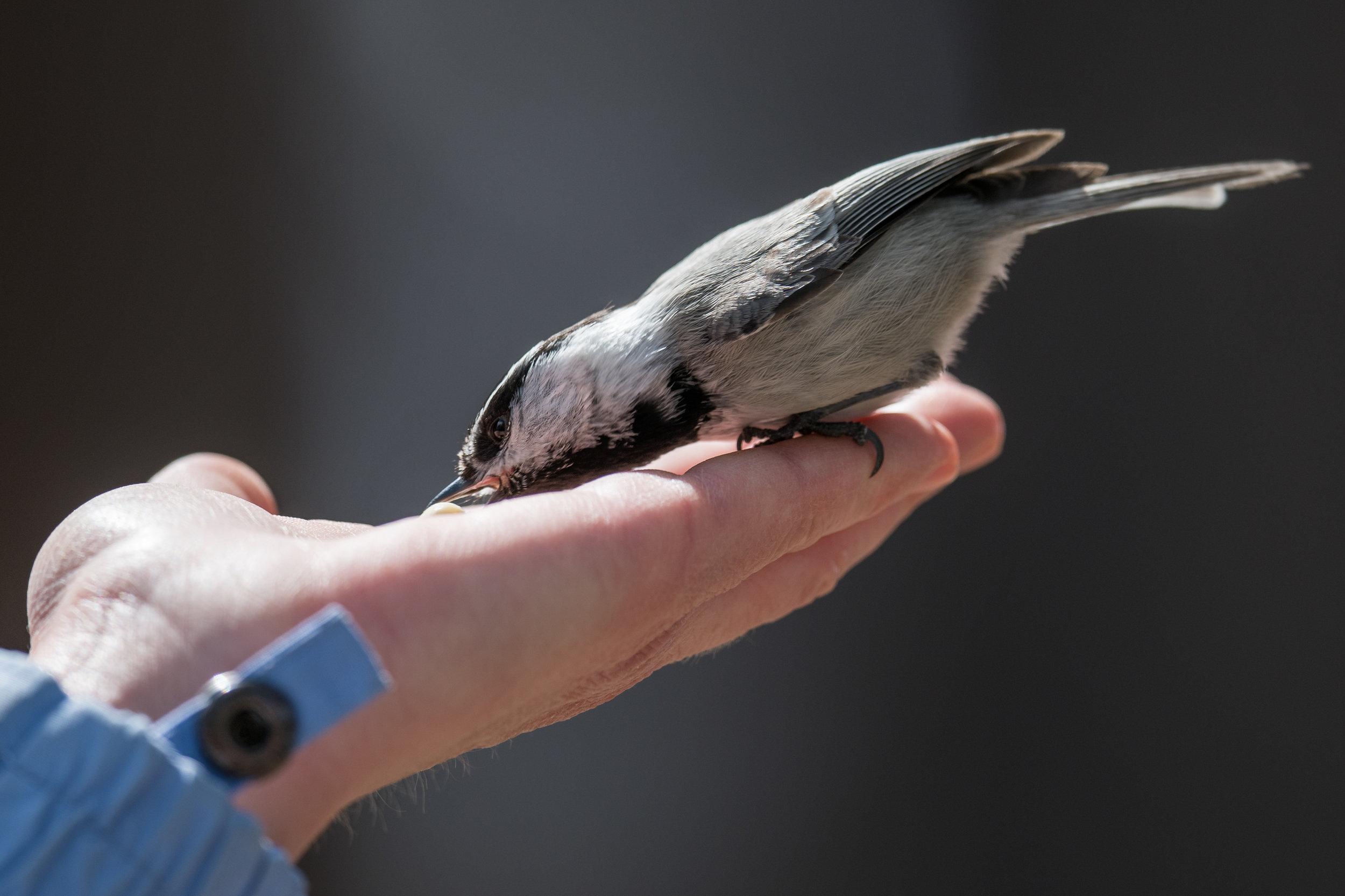 Bird in the Hand: What fun