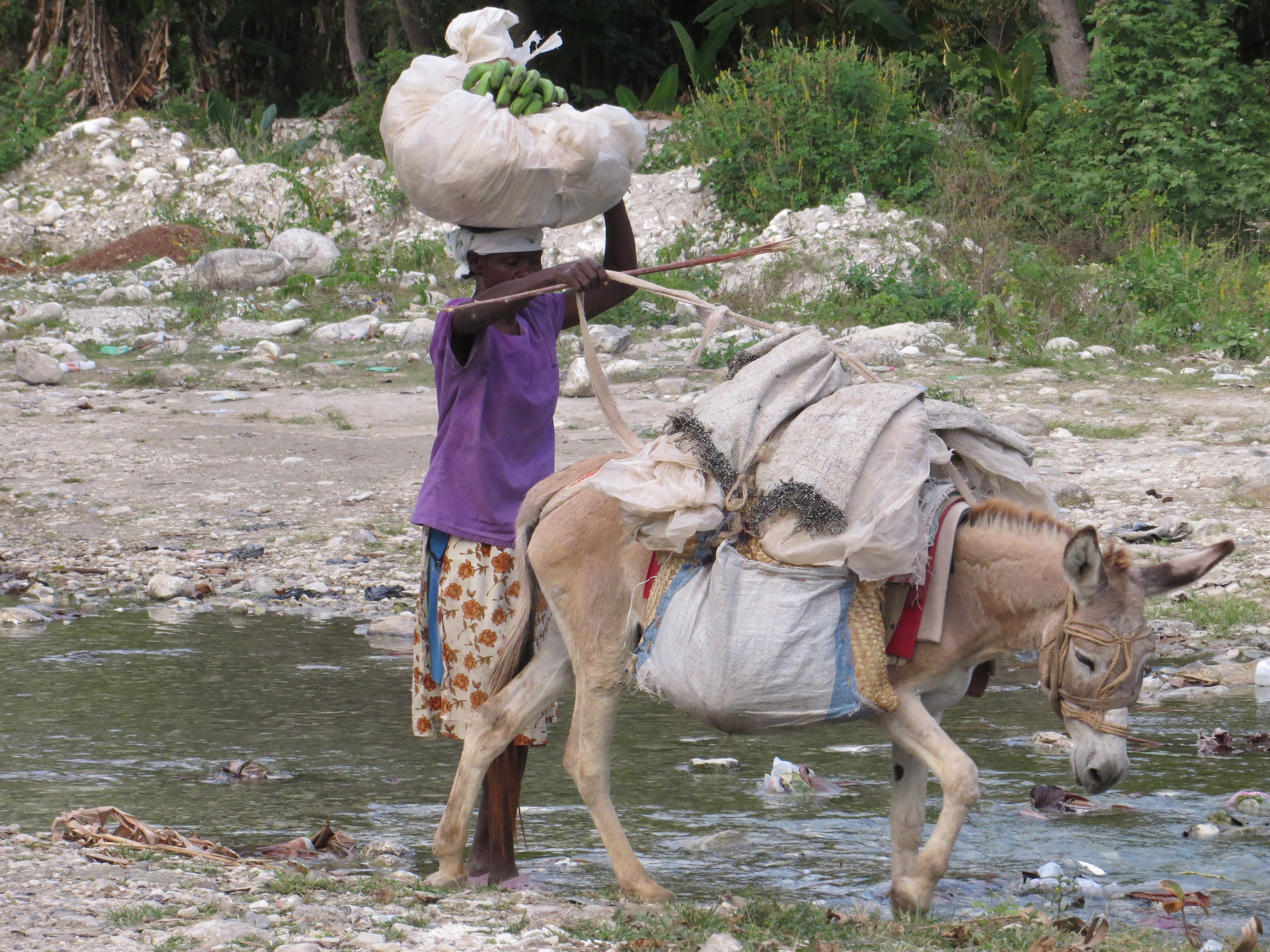 A woman carries supplies along a polluted waterway in the Haitian countryside.