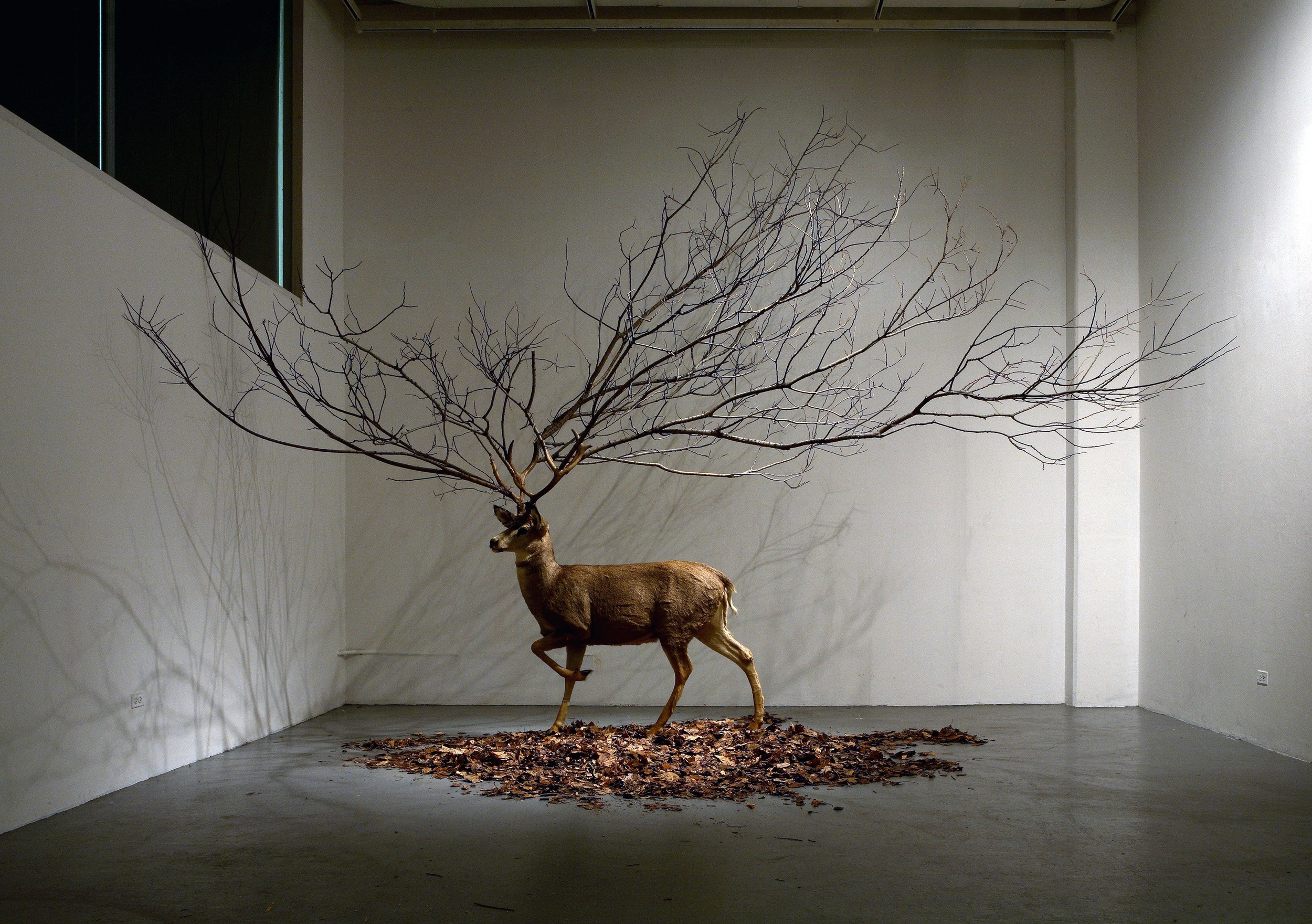 UNTITLED - taxidermic deer, branches, leave