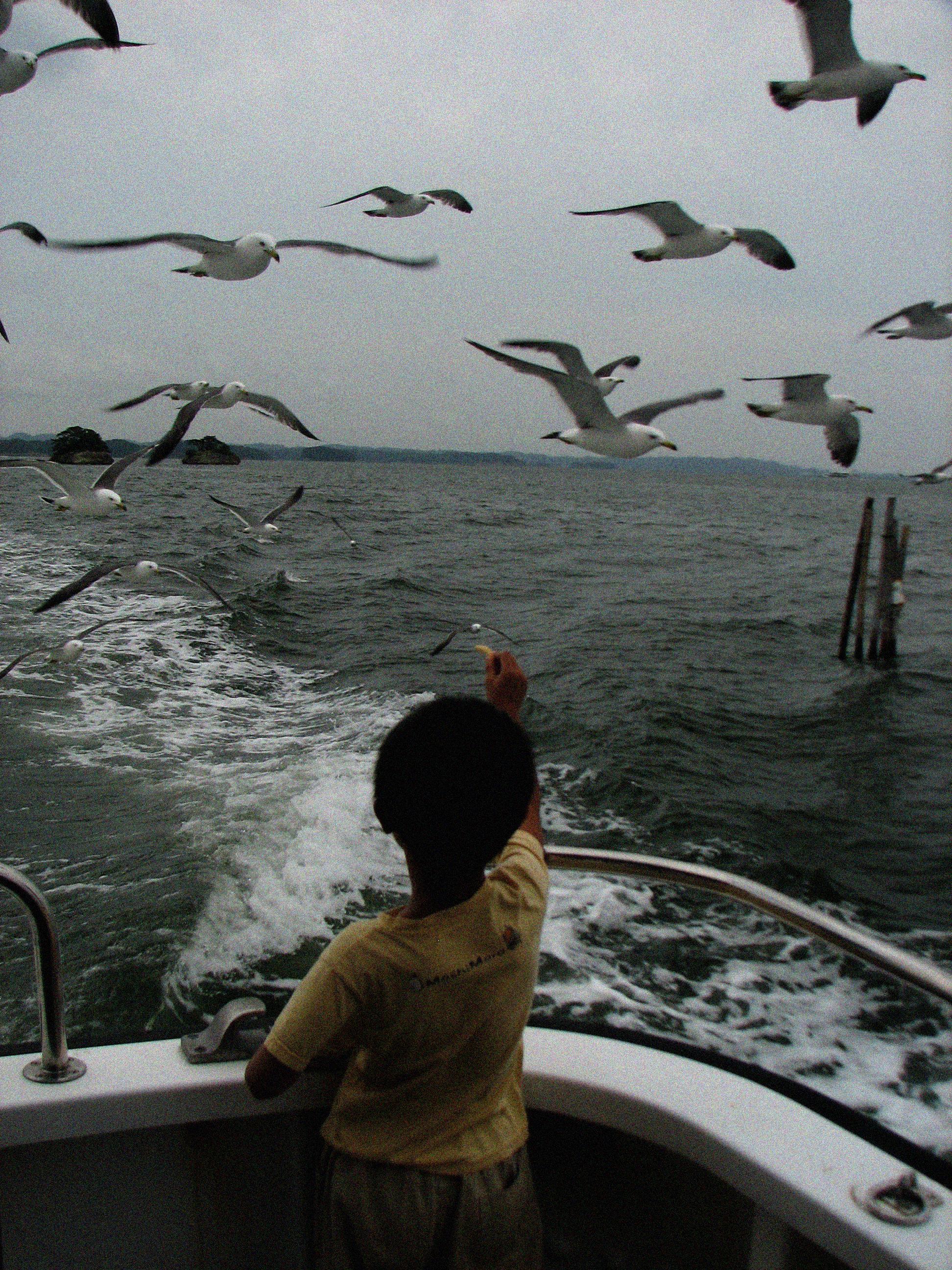 Hokkaido Gulls_1.jpg