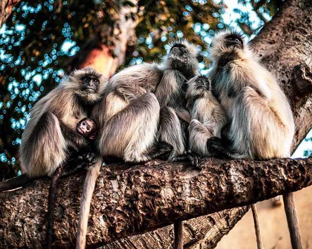 Family🐒 . . . . #india #love #family #familybond #loveanimals #travel #jaipur #monkeylove #nature #worldtravel #familylove #lovelife #monkeys #babymomkey #baby #cannon #naturephotography #photooftheday
