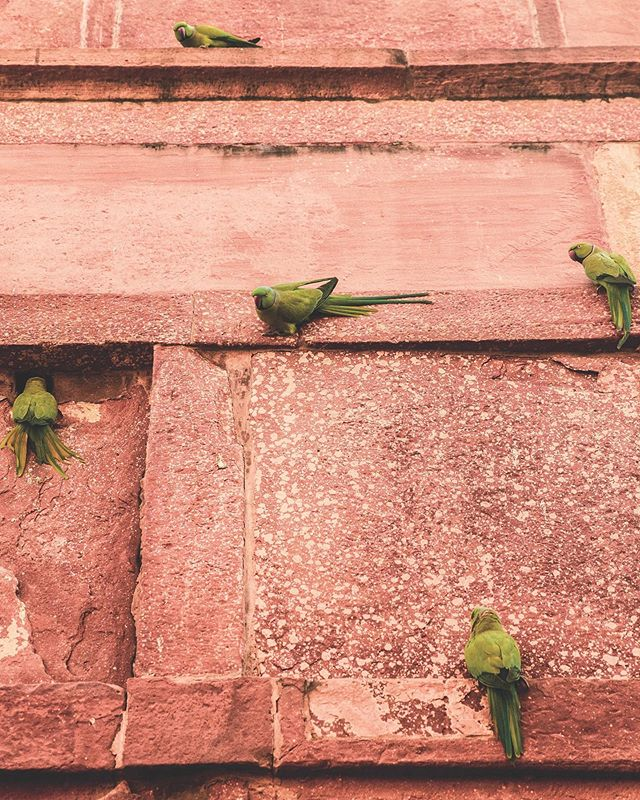 Hang on 💫 . . . #india #travel #tajmahal #wallart #love #familylove #explore #onelife #livelife #loveall #bird #nature #lialarrea #LL #photography #animals #smile #choosehappiness #animalsteach #parrot #parrotsofinstagram #parrotsofindia #mentalhealthawareness #LLphotography #angles