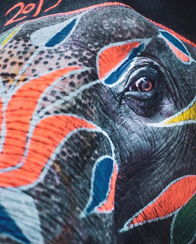 Although beautiful to some eyes, we all see through different lenses. . . . #india #elephantsofindia #jaipur #freewill #justlikeus #elephant #art #photography #naturephotography #travelphotography #love #animalsarejustlikeus #LL #LLphotography #painting