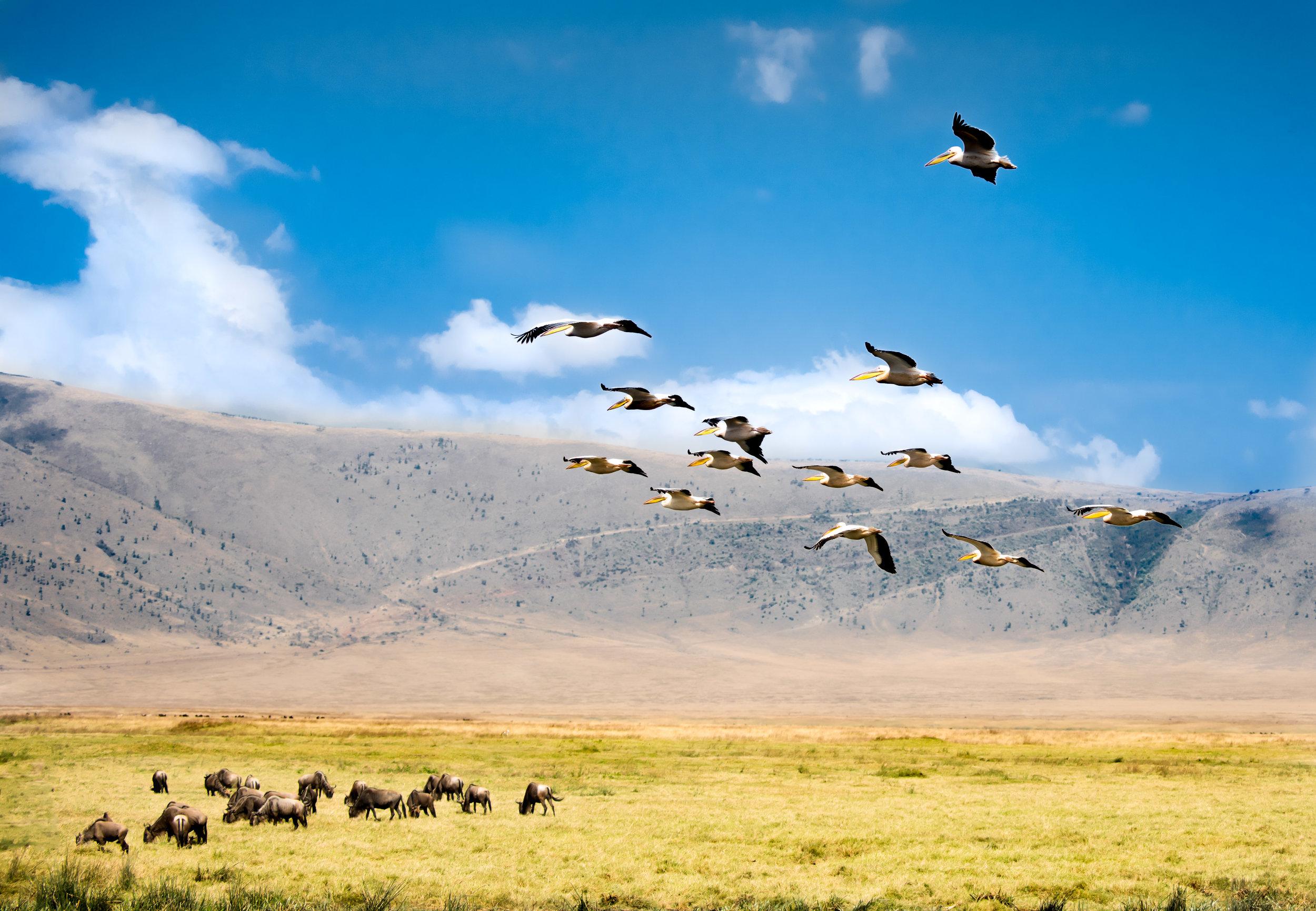 Tanzania-Earth-Photo-By-Tricia-Suriani-Ramsay-1.jpg