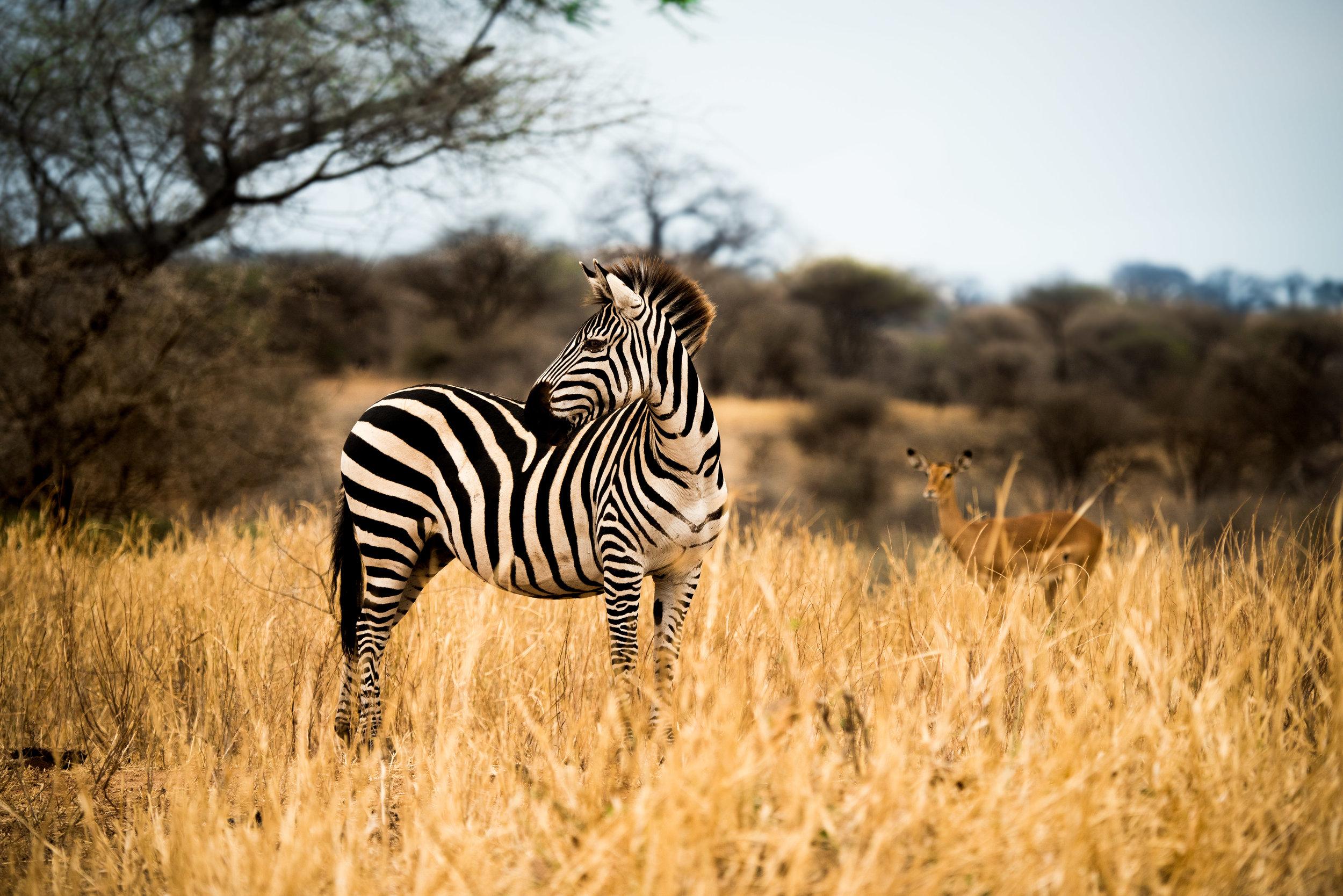 Tanzania-Earth-Photo-By-Tricia-Suriani-Ramsay-7.jpg