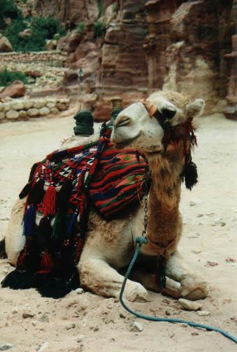 camel-jordan-mike-kramer.jpg