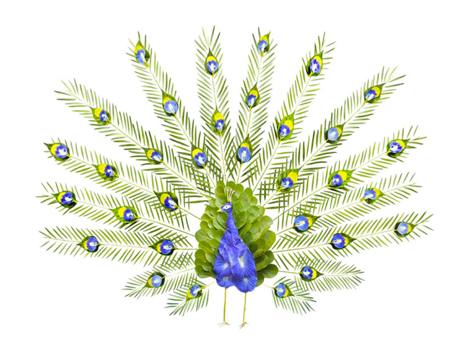 Red Hong Yi, Peacock made from Butterfly Pea Flowers, bottlebrush leaves, coconut leaf sticks, alamandas