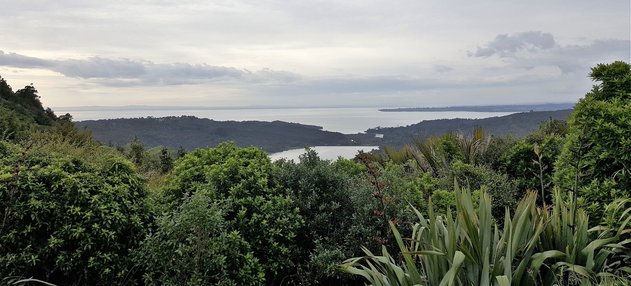 Looking out towards Huia from Scenic Drive in Titirangi