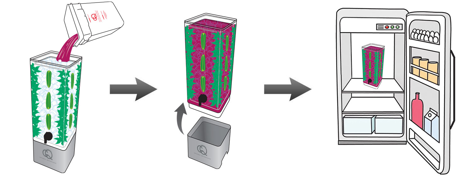 CQ-Black-Raspberry-Açaí-Jalapeno-Mint-Infused-Water-Recipe-Step-6-CQ-Refresh-Refrigerate-Infuse