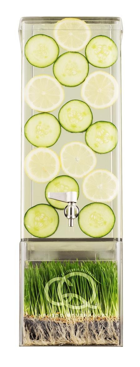 CQ Lemon Cucumber Infuses Water