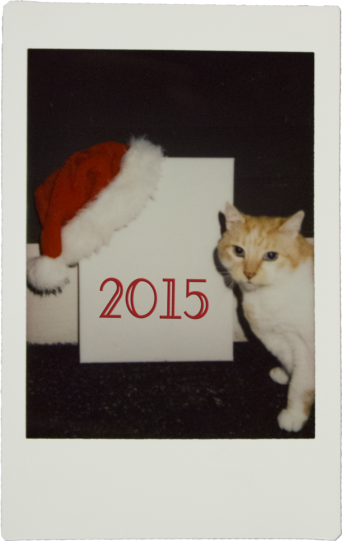 sunny_2015_poloroid.png