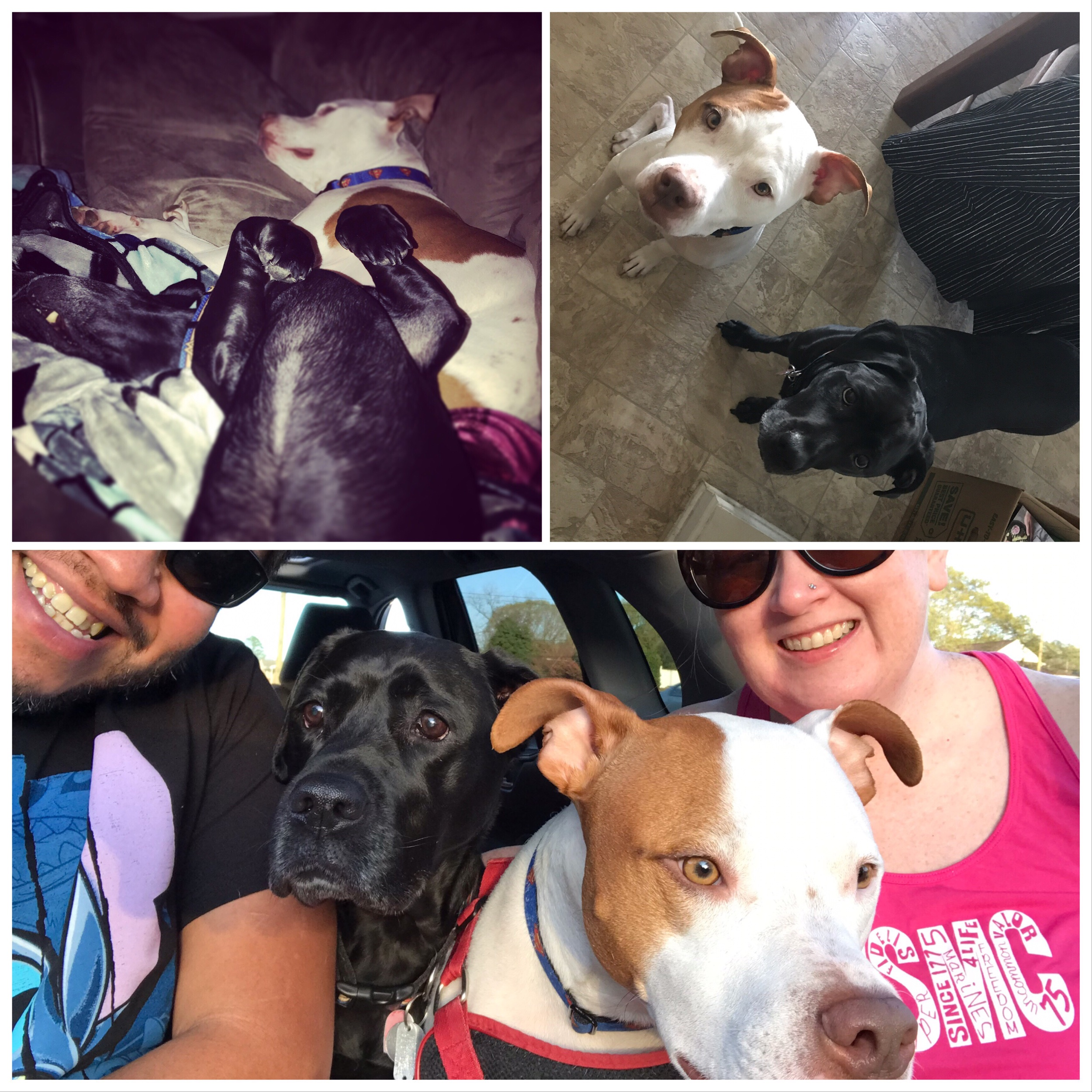 Happy Son's and Daughter's Day to our Furkids! - Bella and Walker, you are our world. We are so blessed that you adopted us and trust us to take care of you and spoil you rotten.