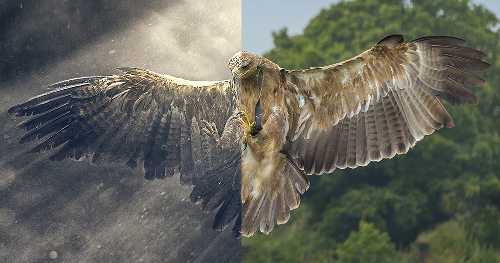 Thanks a million to  Kath Harper  for lending me  this exquisitely captured eagle image !