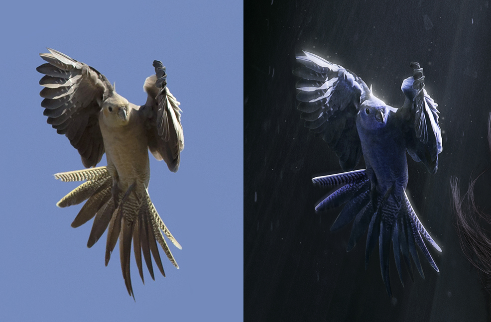 Bird before and after Photoshop