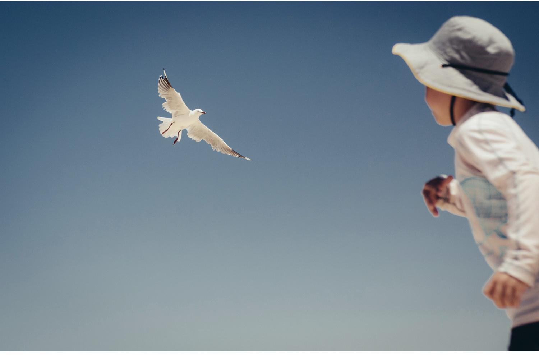 chasing seagulls.02.jpg