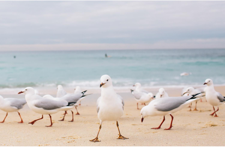 sheridan_nilsson_bronte_beach.37.jpg