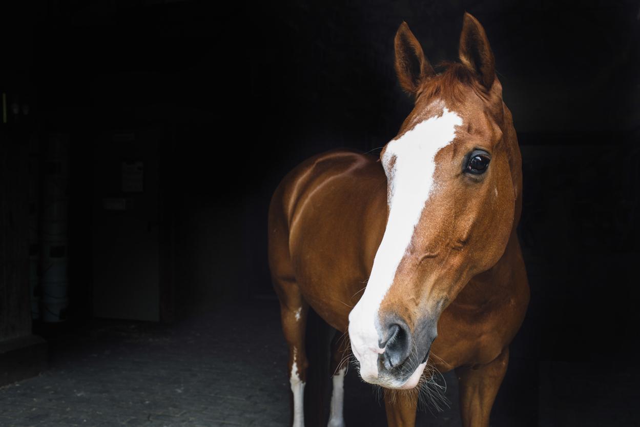 centennial_park_equestrian_centre_horse_photography.-2.jpg