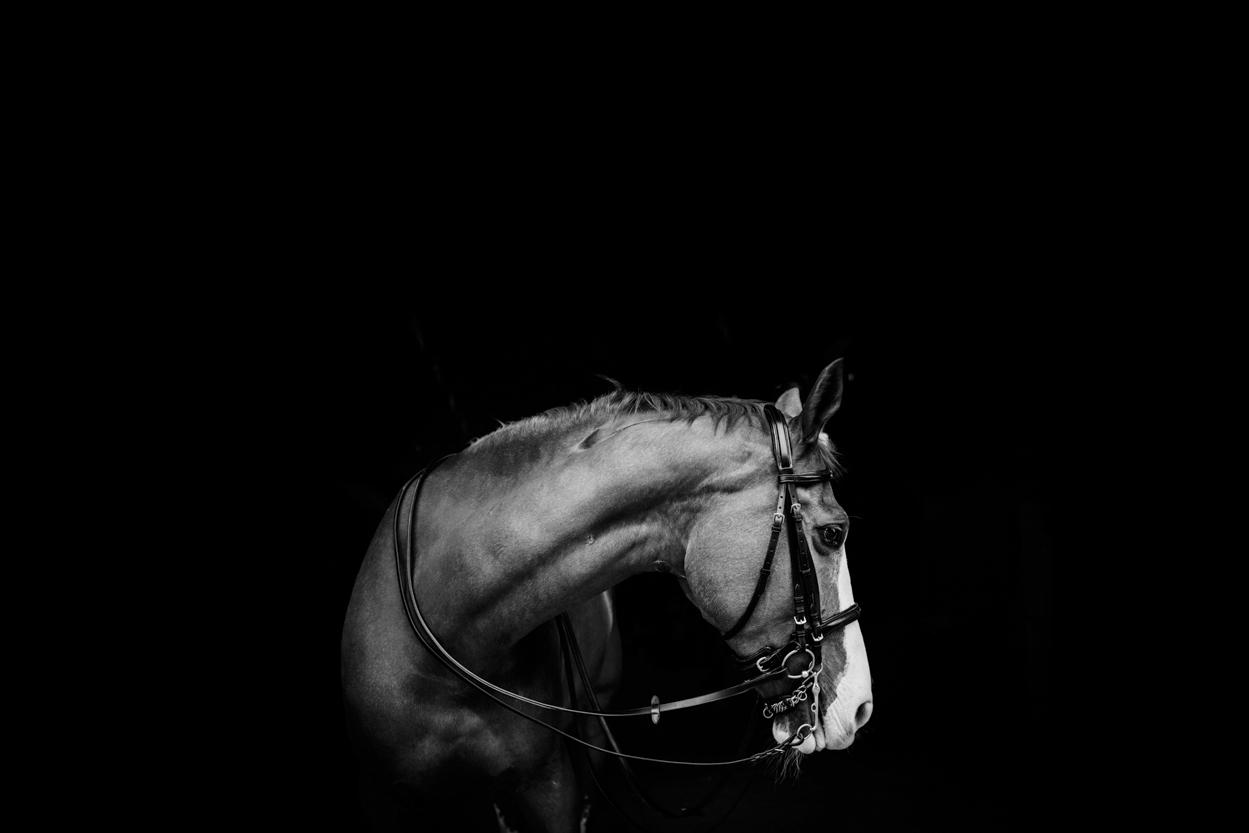centennial_park_equestrian_centre_horse_photography.-.jpg