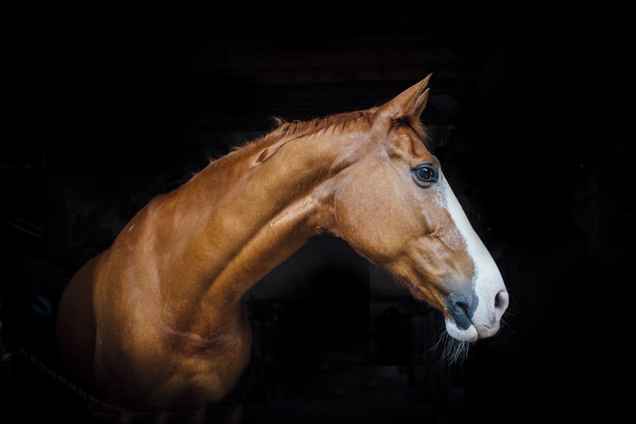 centennial_park_equestrian_centre_horse_photography.-9.jpg