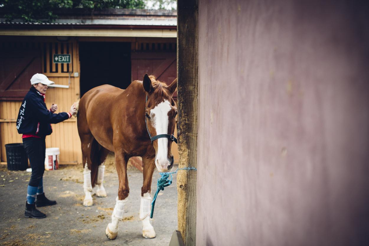 JED_Centennial_Park_Equestrian_Centre.089.jpeg