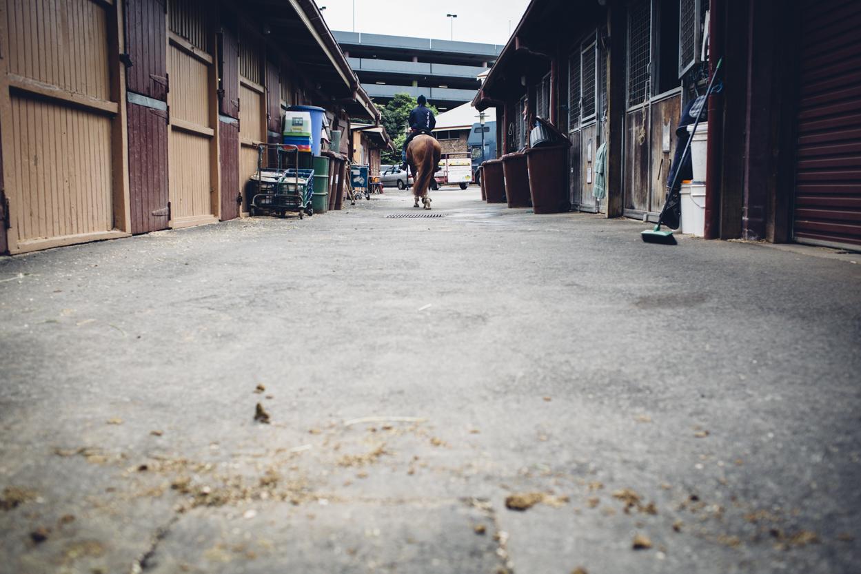 JED_Centennial_Park_Equestrian_Centre.096.jpeg