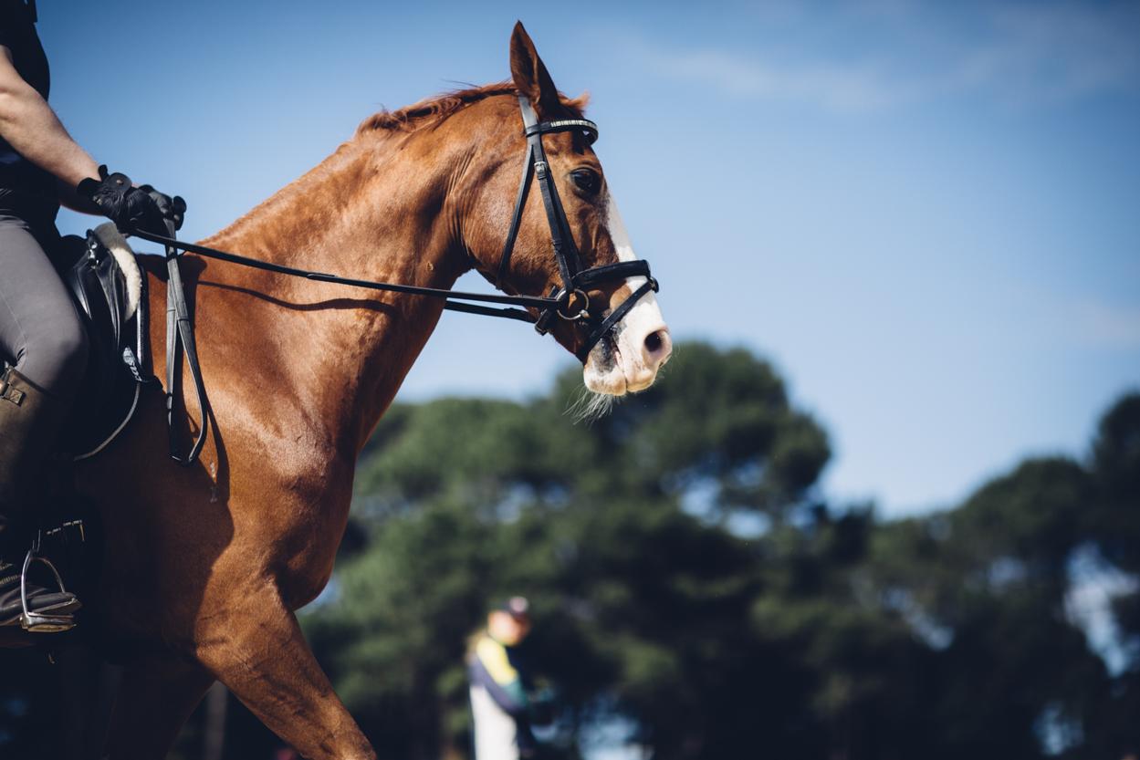 JED_Centennial_Park_Equestrian_Centre.030.jpeg