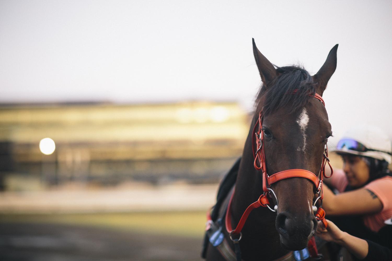 randwick_racecourse_australian_turf_club-3603.jpg