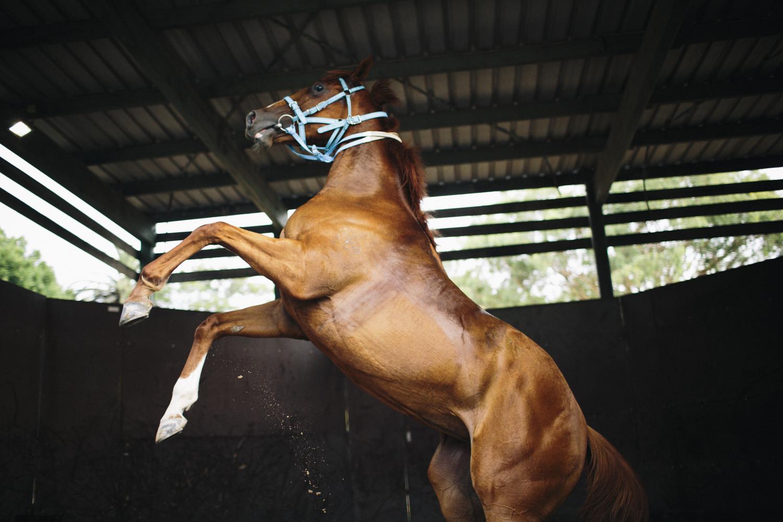 randwick_racecourse_australian_turf_club-3793.jpg