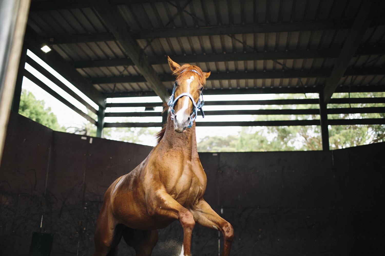 randwick_racecourse_australian_turf_club-3795.jpg