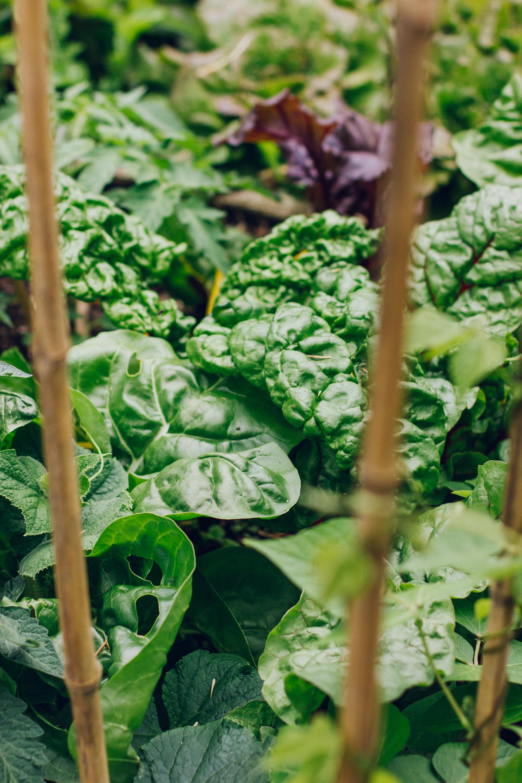 Josh Griggs Food Portfolio-43.jpg