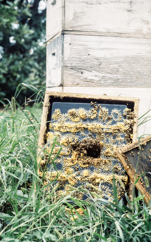 Hives-1.jpg
