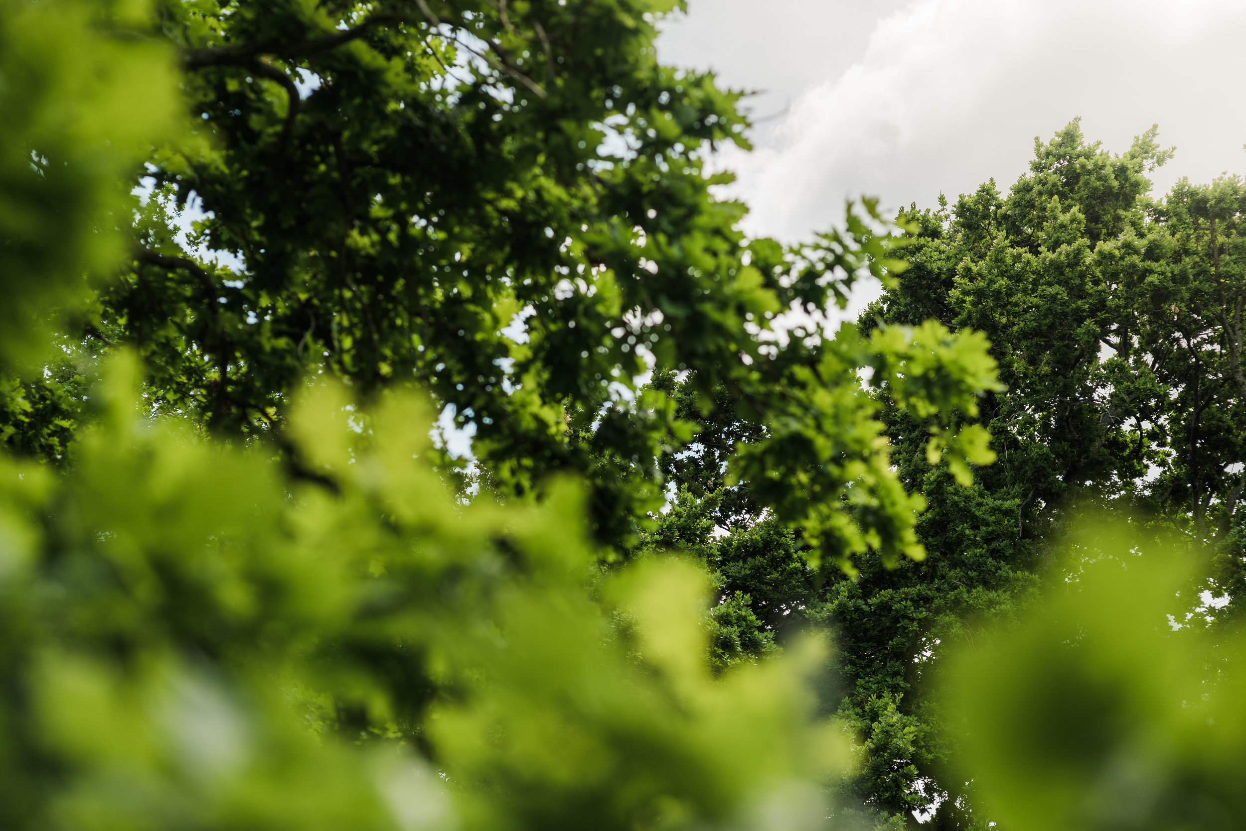 Studio South - The International-8.jpg