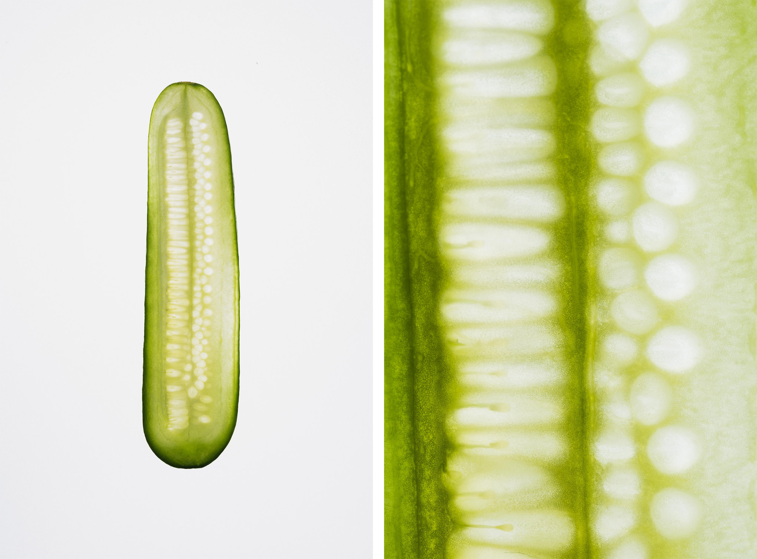 Auckland-Food-and-Lifestyle-Photographer-Cucumber.jpg