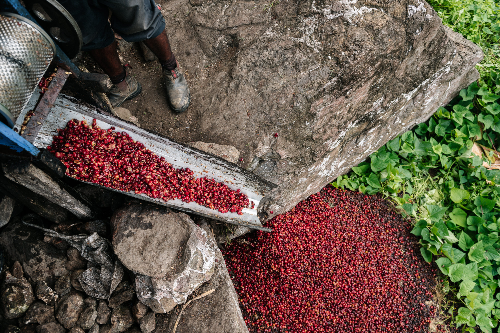 Papua New Guinea Coffee - Josh Griggs Photographer-19.jpg