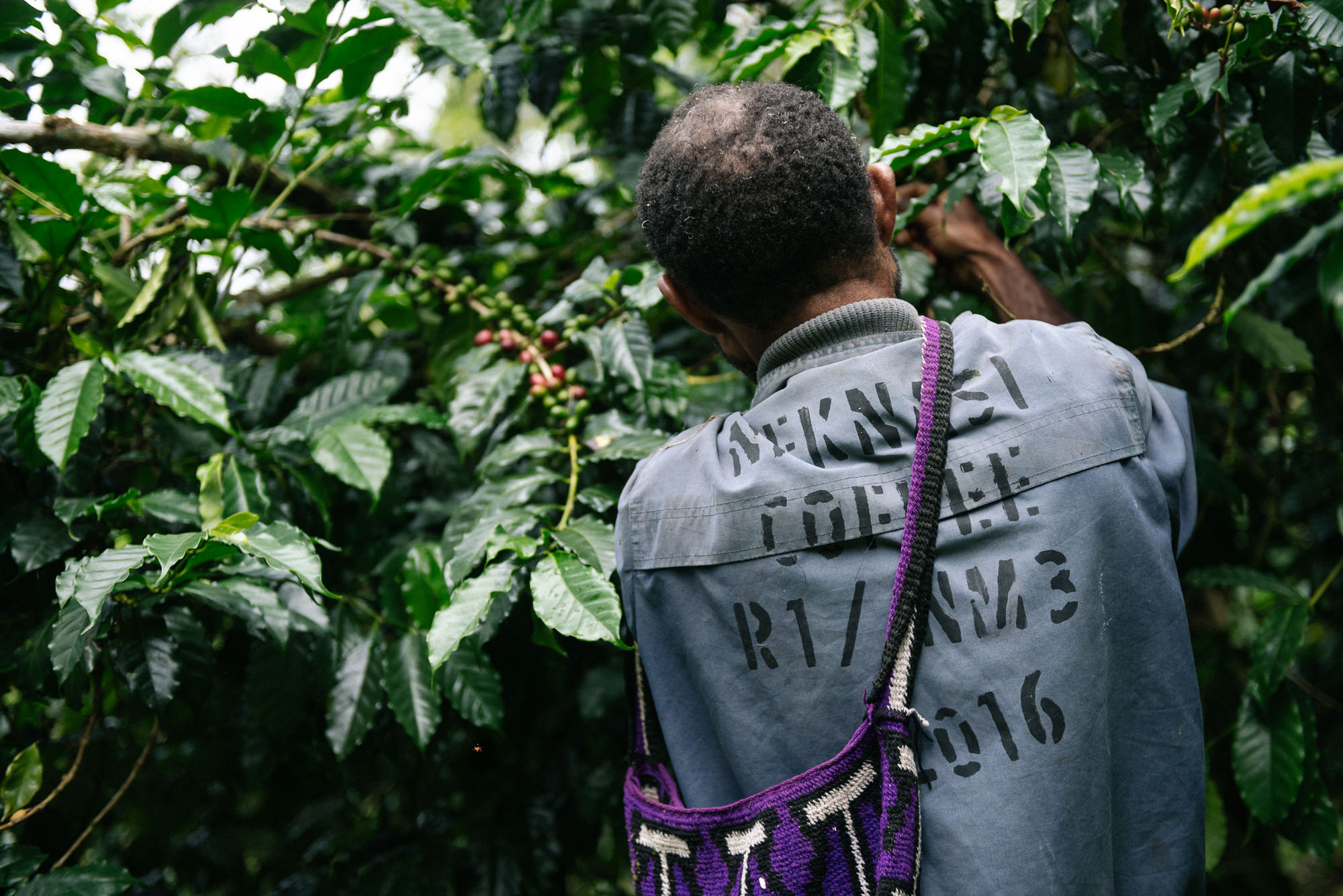 Papua New Guinea Coffee - Josh Griggs Photographer-30.jpg