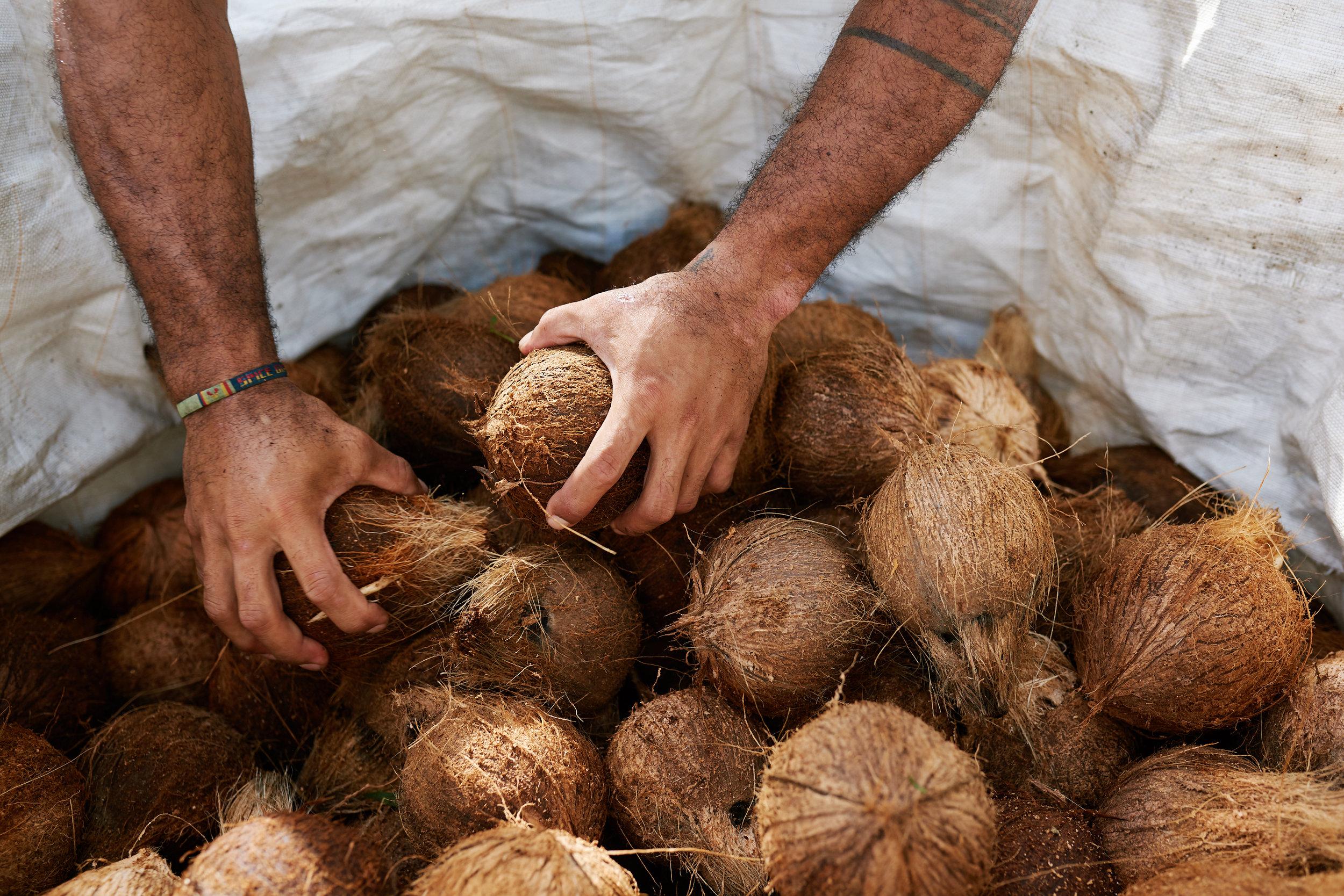 Samoa Website 18.jpg