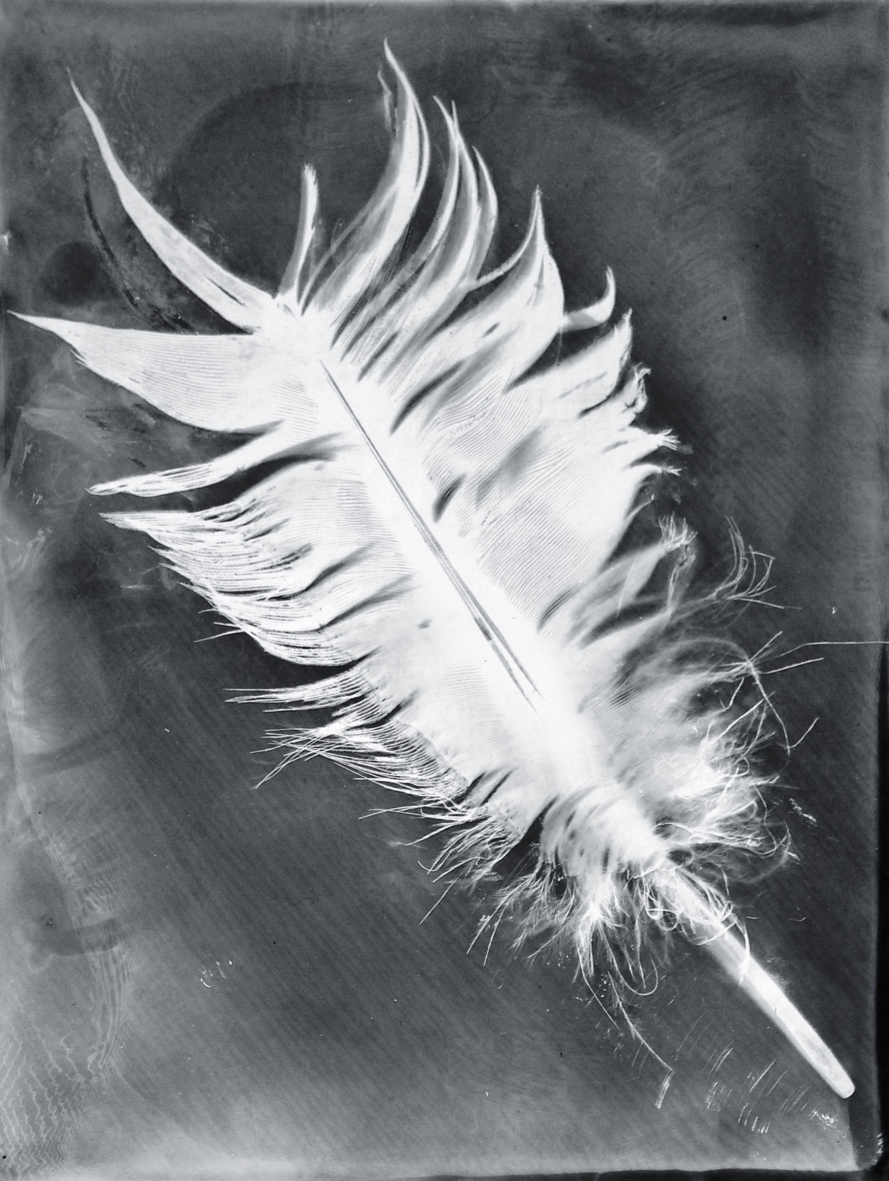 Feather In My Emulsion