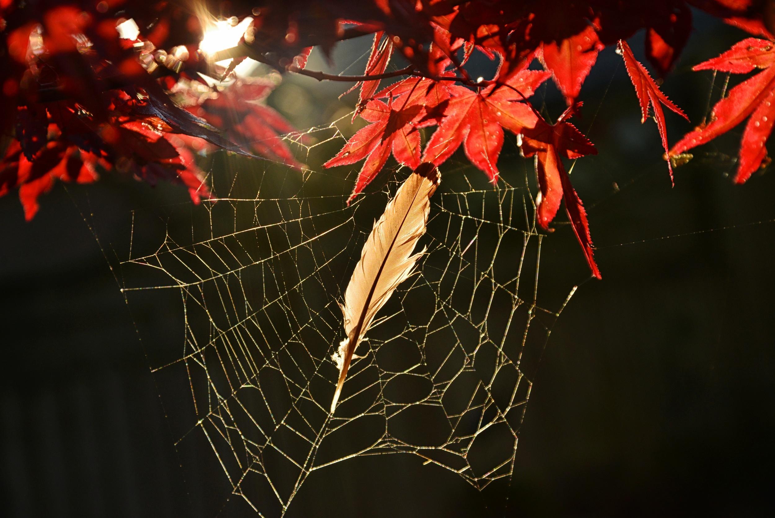 cobwebs.jpg