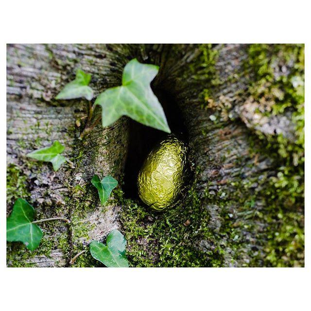 Amazing what you can find in the woods! . . . . . . . #easteregghunt #inthewoods #easterchocolate #gloomandglow #savouringtheseasons #momentsofmine #theartofslowliving #seekthesimplicity #embracingtheseasons #livethelittlethings #littlestoriesofmylife #aquietstyle #distractionsandinspirations #simplepleasures #nestandflourish #kinfolklife  #thehappynow #momentslikethese  #lifewithlottie
