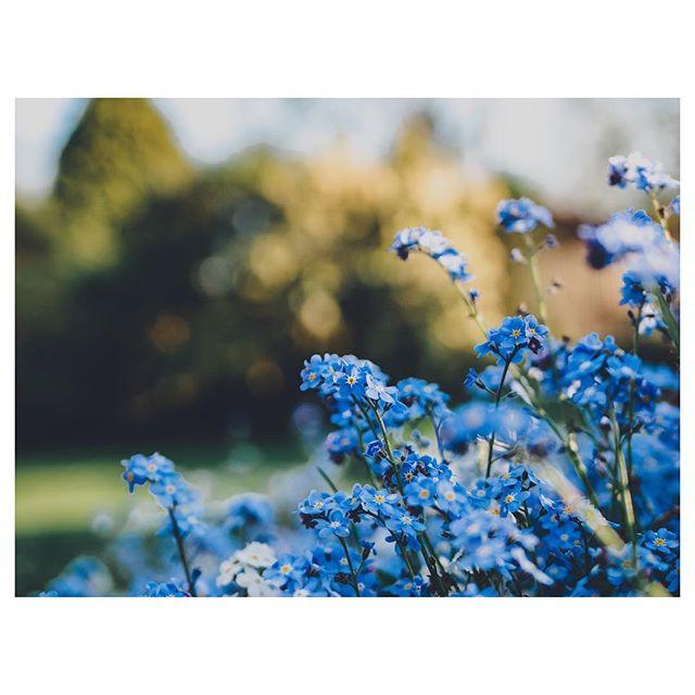 Monday blues. . . . . . . . . #gloomandglow  #awakethelight #jeweledlight #chasinglight #lightinspired #momentsofmine #theartofslowliving #seekthesimplicity #embracingtheseasons #livethelittlethings #littlestoriesofmylife #aquietstyle #distractionsandinspirations #simplepleasures #nestandflourish #kinfolklife  #momentslikethese #botanicalpickmeup