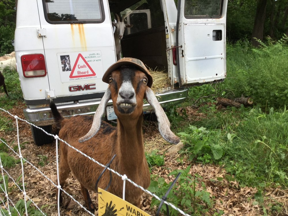 Who Can Resist A Goat In A Trucker Hat?